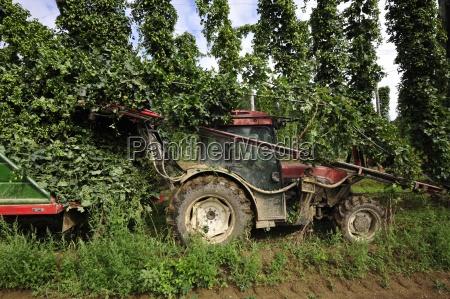 frugtfrugt hophopplanteplanterlandbrugplanteavljord ordenlandbrugsokonomien landdistrikternelandbrug