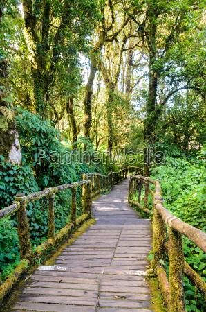 caminho na floresta feita da madeira