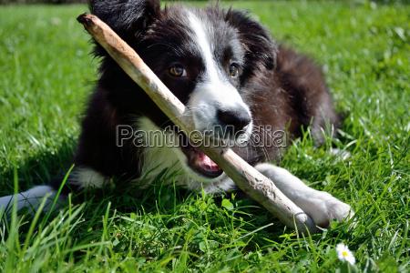 cao cachorro de boa natureza