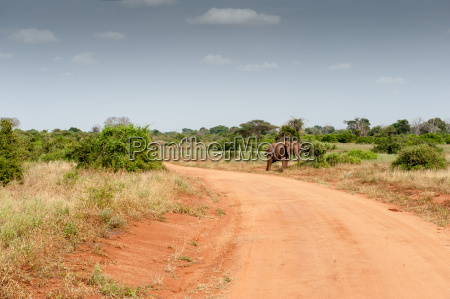animal africa elefante marfim presa savana