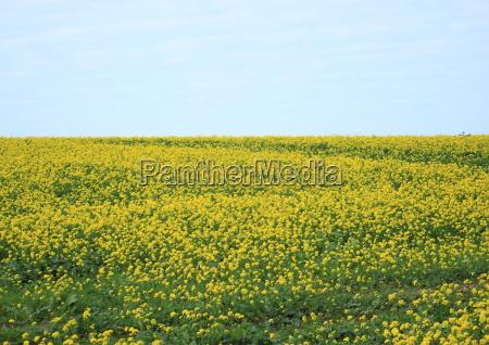 azul cor flor planta verde agricultura