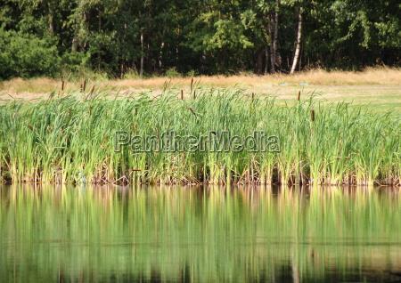 reflexao ao ar livre erva daninha