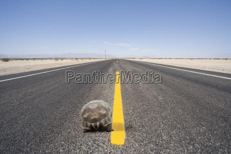 movimento em movimento perigo projeto deserto