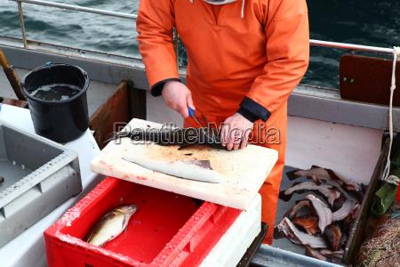 pesca pescador peixes bacalhau acordo negocio