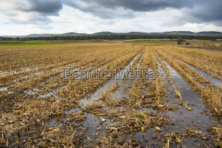 inundacao no campo de milho apos