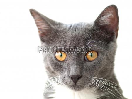 animal animal de estimacao olho orgao