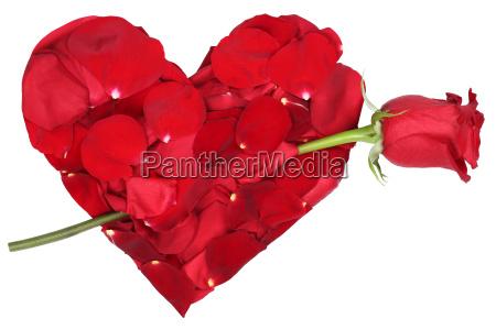 coracao das flores com amor do