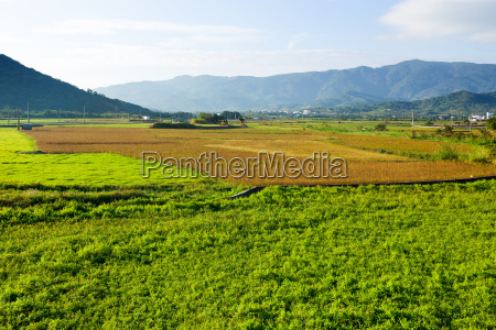 alimento folha ambiente arvore topo agricultura
