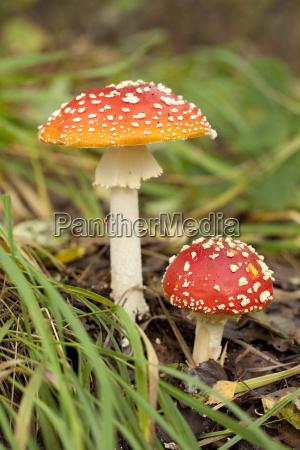 cogumelo - 13430380
