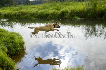 aguas animal cao salto banho rio