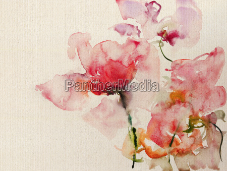 tela da aguarela de rosa