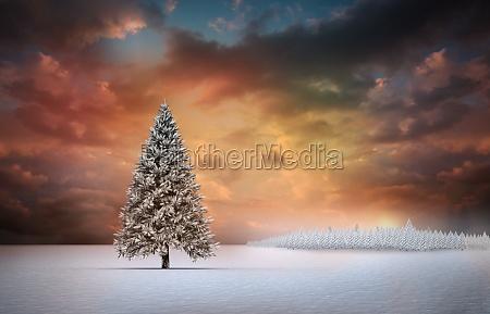 ambiente arvore inverno por do sol