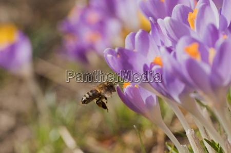 opiniao do close up da abelha