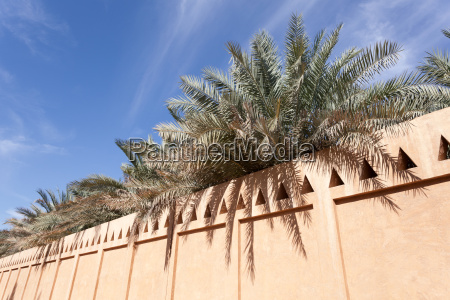 palm trees in the al ain
