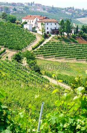 vinhedos e vinicolas em piemonte