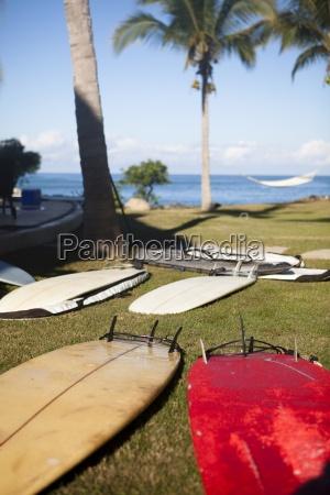 um punhado de pranchas de surf