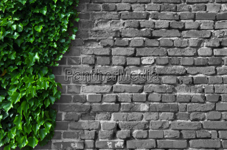 parede coberta