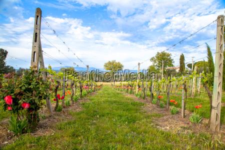 agricultura vinhas