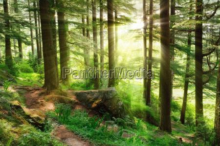 sunrays cair em uma floresta verde