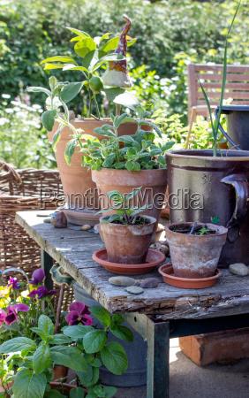 jardim madeira folhas verao jardinagem hortela