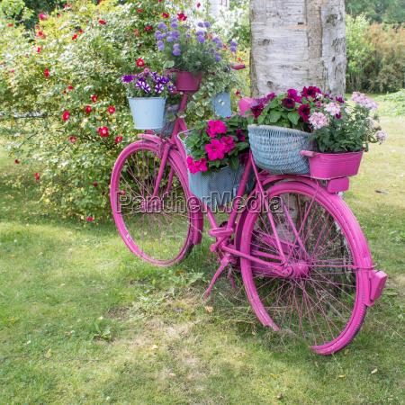 arvore jardim roda flor planta flores