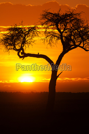 por do sol africano por do