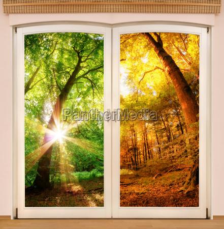magic window showing season change