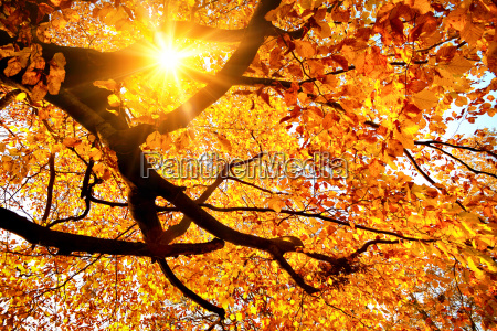 sun shining in the golden autumn