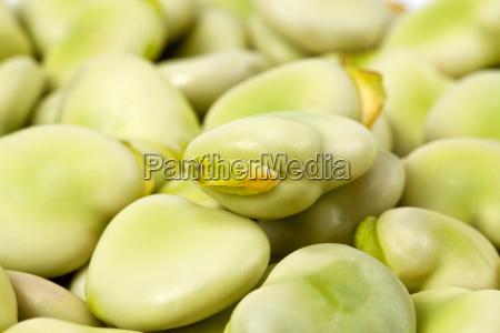 alimento verde vegetal amplo pano de