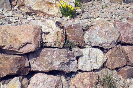 have sten blomst blomster plant plante