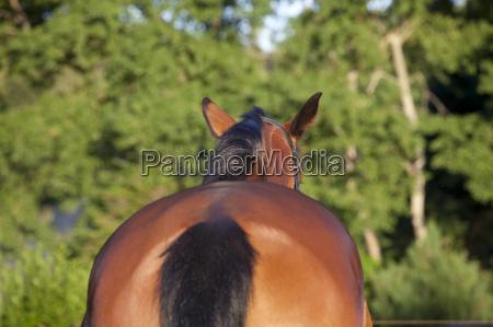 animal verde cavalo cavalos de volta