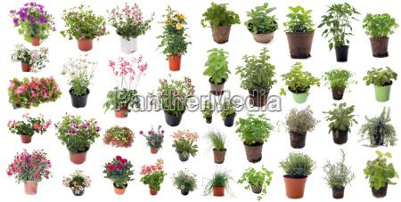 ervas aromaticas e plantas de flores