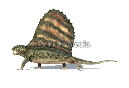 dinossauro de dimetrodon visto de um