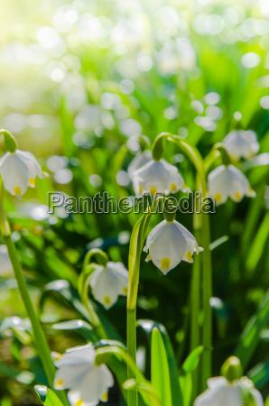 belo agradavel flor lindas flores inflorescencia
