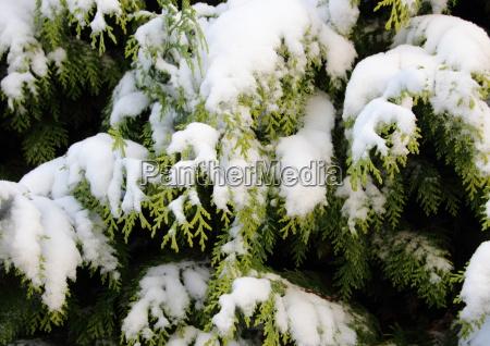 belo agradavel closeup inverno de neve
