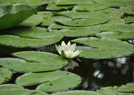 parque flor planta folhas verao reflexao