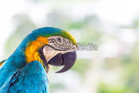 azul belo agradavel closeup animal passaro