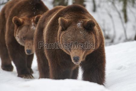 closeup inverno animal mamifero frio animais
