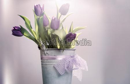 tulips cor de rosa na cubeta