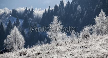 hoarfrost cobriu a paisagem do inverno