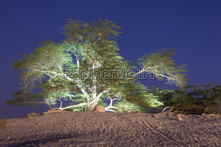 tree of life in bahrain