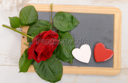 educacao espaco flor planta rosa madeira
