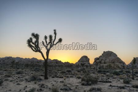 passeio viajar deserto ferias verao eua