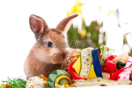 coelho colorido com os ovos de