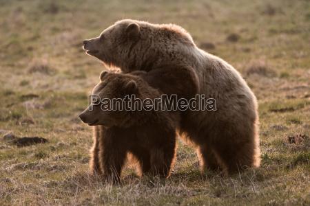 urso bonitinho engracado