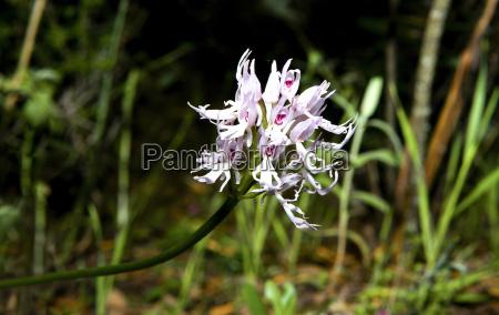 composicao closeup flor planta lindas flores
