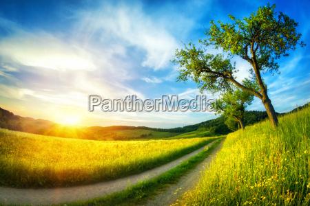 idyllic landscape at sunset