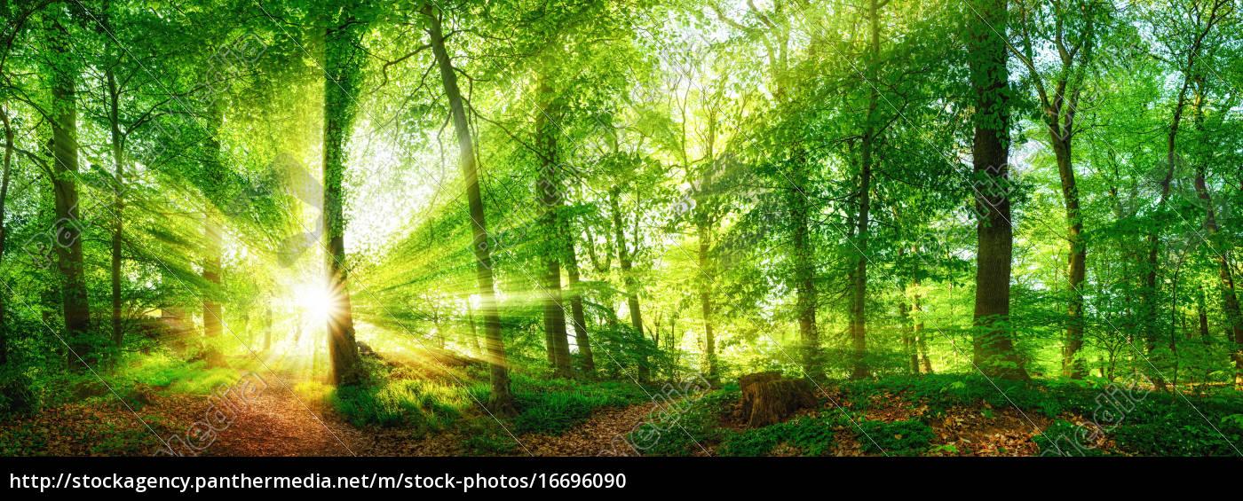panorama, da, floresta, com, raias, de - 16696090