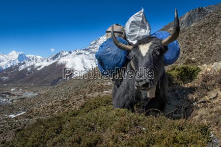 cor montanhas animal mamifero parque nacional