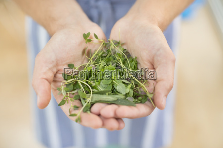 maos segurando um monte de ervas